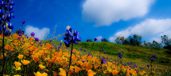 Screenshot №1 pro téma Yellow spring flowers in the mountains 720x320