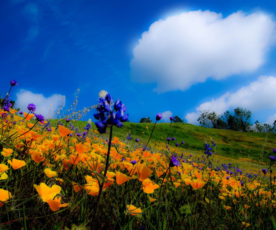 Screenshot №1 pro téma Yellow spring flowers in the mountains 960x800