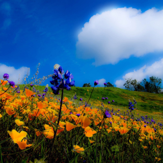 Kostenloses Yellow spring flowers in the mountains Wallpaper für 320x320