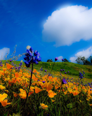 Yellow spring flowers in the mountains - Fondos de pantalla gratis para 640x960