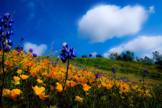 Yellow spring flowers in the mountains Background for Android, iPhone and iPad