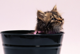 Sweet Kitten In Bucket Background for Android, iPhone and iPad