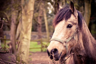 Horse Portrait Background for Android, iPhone and iPad