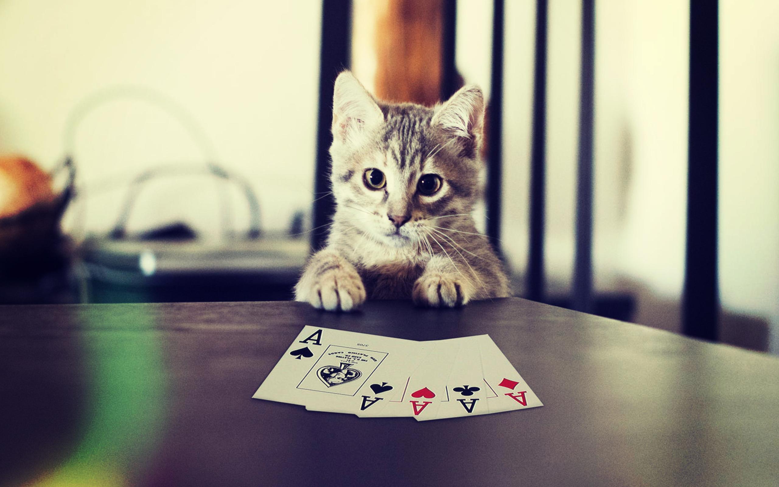 Картинки на аву коты с надписью