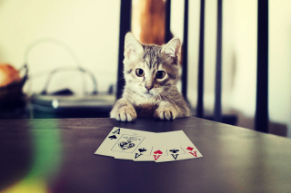Poker Cat sfondi gratuiti per cellulari Android, iPhone, iPad e desktop