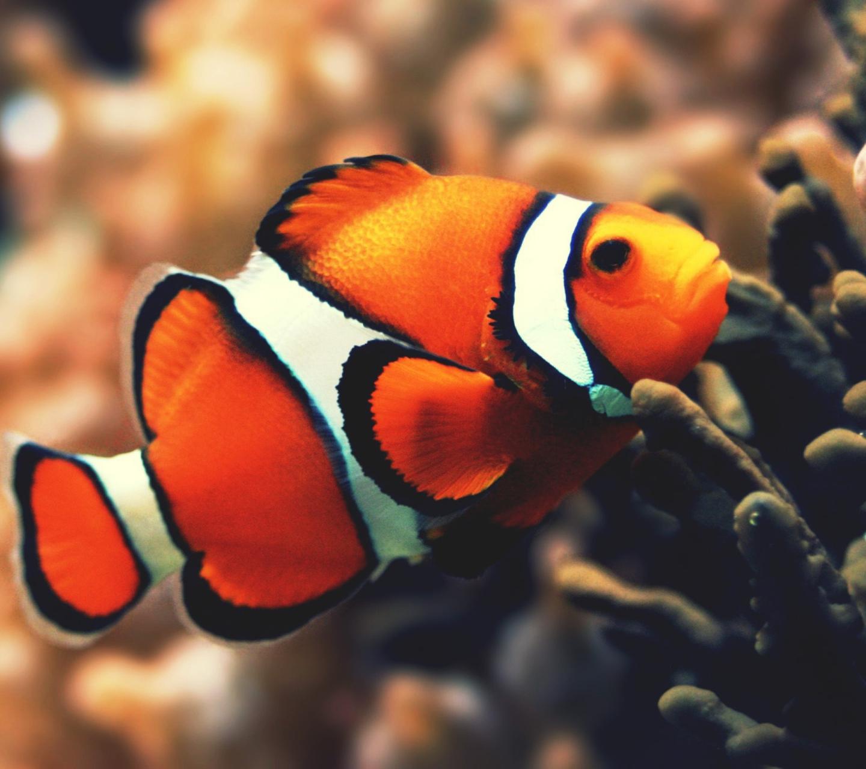 Смотреть картинки с рыбами