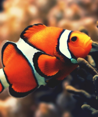 Nemo Fish Background for Nokia Lumia 928