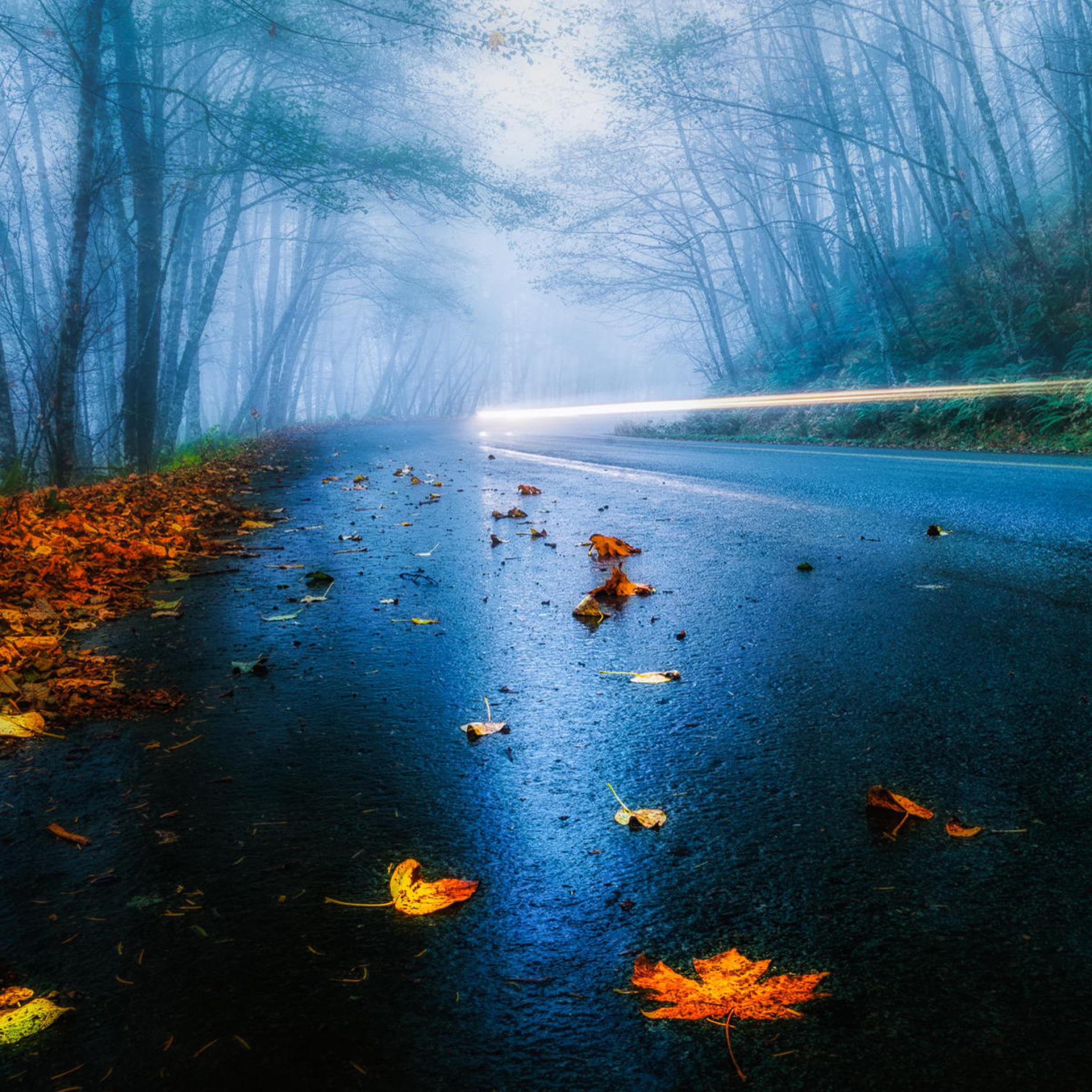 автомобиль осень лес дорога загрузить