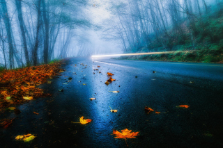 Mist Road Wallpaper for Android, iPhone and iPad