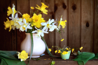 Daffodil Jug Wallpaper for Android, iPhone and iPad