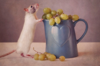 Free Mouse Loves Grapes Picture for Android, iPhone and iPad