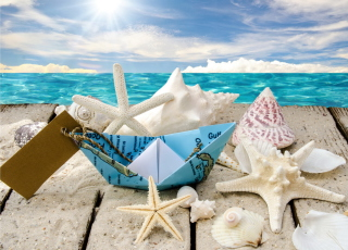 Free Seashells Picture for Android, iPhone and iPad