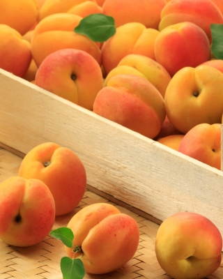 Apricots Background for Nokia Asha 300
