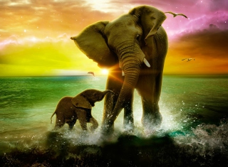 Elephant Family Picture for Android, iPhone and iPad