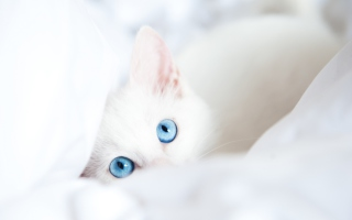 Two Blue Eyes Picture for Android, iPhone and iPad