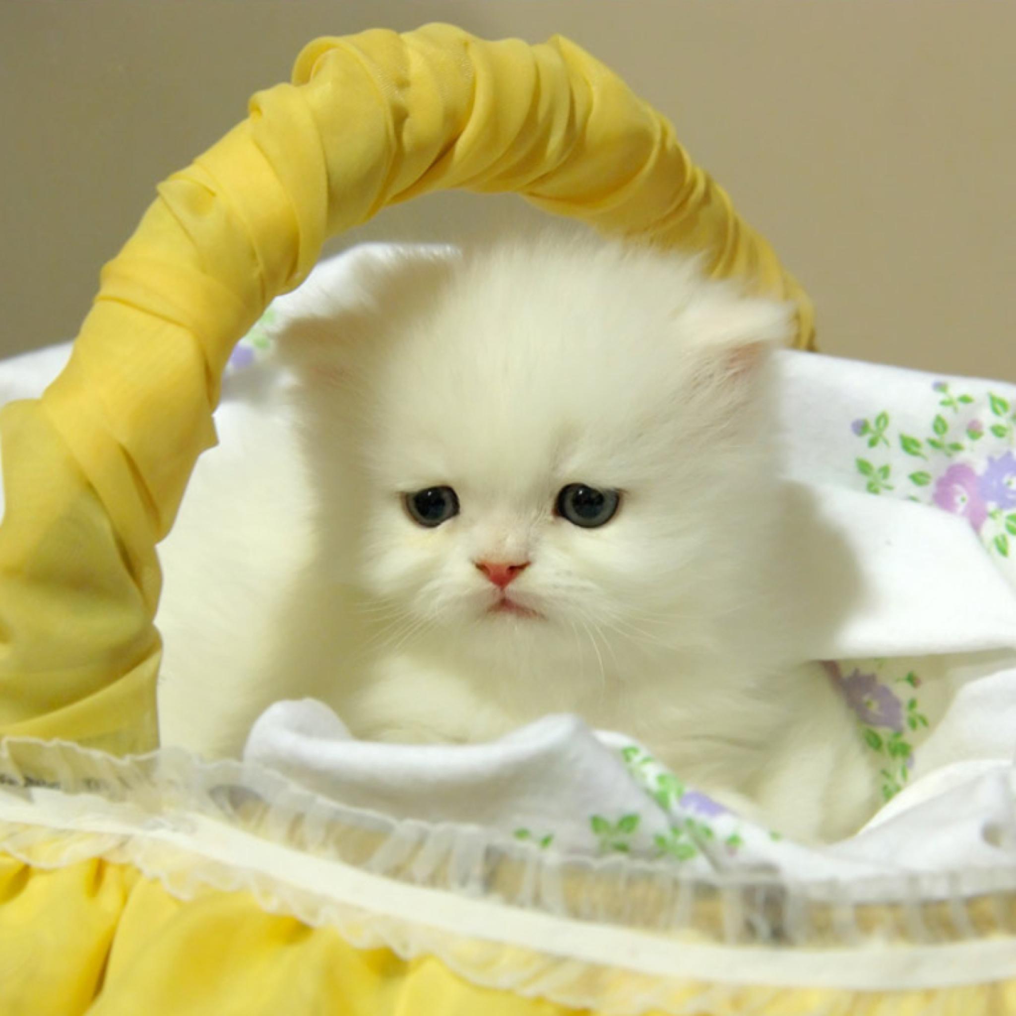 Котята анимация необычная, бересты своими