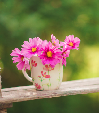 Pink Daisies In Mug Background for Nokia Asha 310