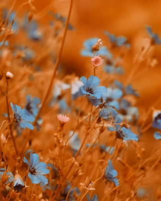 Blue Flowers Field Wallpaper for HTC Titan