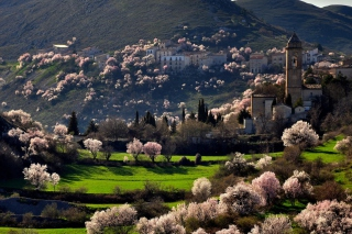 Free Spring In Italy Picture for Android, iPhone and iPad