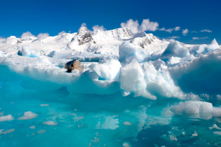 Free Seal in the Arctic ice Picture for 960x854