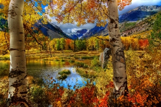 Free Amazing Autumn Scenery Picture for Android 960x800