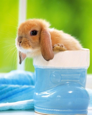 Free Little Bunny Picture for Nokia X3
