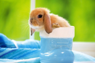 Little Bunny Wallpaper for Android, iPhone and iPad