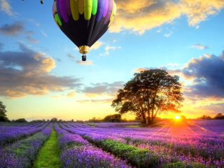 Lavender Field para Nokia X2-01