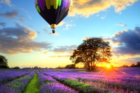 Lavender Field para LG E400 Optimus L3