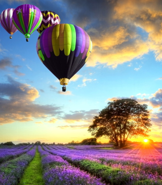 Lavender Field Wallpaper for Nokia Asha 311