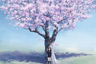 Girl And Sakura papel de parede para celular para Android 640x480