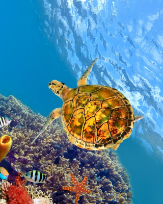 Colorful Underwater World Background for Nokia C1-01