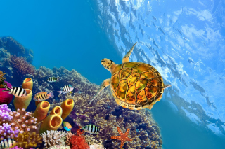 Colorful Underwater World Wallpaper for 220x176
