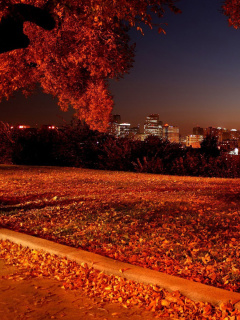 Screenshot №1 pro téma Autumn in Chicago 240x320