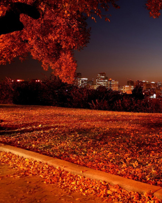 Autumn in Chicago - Fondos de pantalla gratis para 640x960