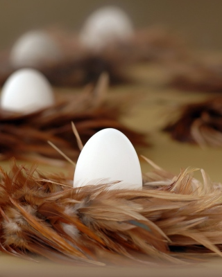 Chicken Egg Wallpaper for Nokia Asha 306