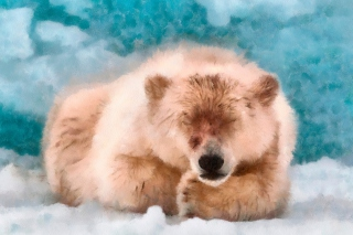 Sleeping Polar Bear Background for Android, iPhone and iPad
