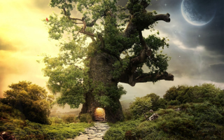 Tree House Wallpaper for Android, iPhone and iPad