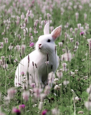 White Rabbit In Flower Field - Fondos de pantalla gratis para 768x1280