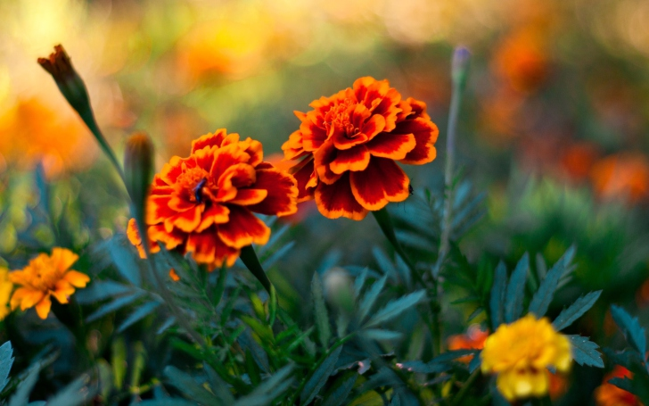 Orange Flower Pair wallpaper