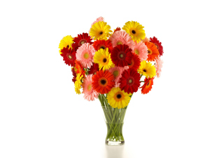 Gerbera Daisy Bouquets Wallpaper for Android, iPhone and iPad