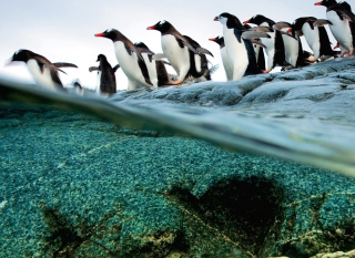 Penguins Background for Sony Xperia Tablet S