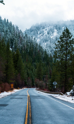Screenshot №1 pro téma Forest Road in Winter 240x400
