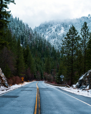 Forest Road in Winter - Fondos de pantalla gratis para 640x960