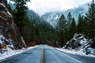 Forest Road in Winter Picture for Android, iPhone and iPad