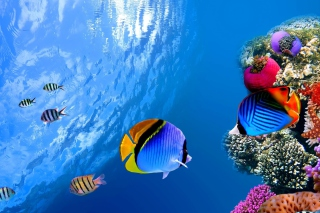 Free Underwater Life Picture for Android 480x800