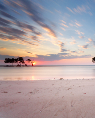 Trees Silhouettes At Pinky Sunset - Fondos de pantalla gratis para iPhone 6 Plus