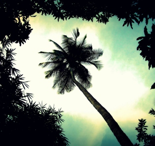 Palm Tree Top - Fondos de pantalla gratis para 1024x1024