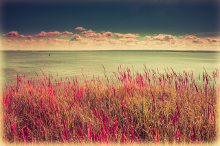 Free Pink Landscape Picture for Android, iPhone and iPad