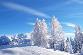 Free White Winter Picture for Android, iPhone and iPad